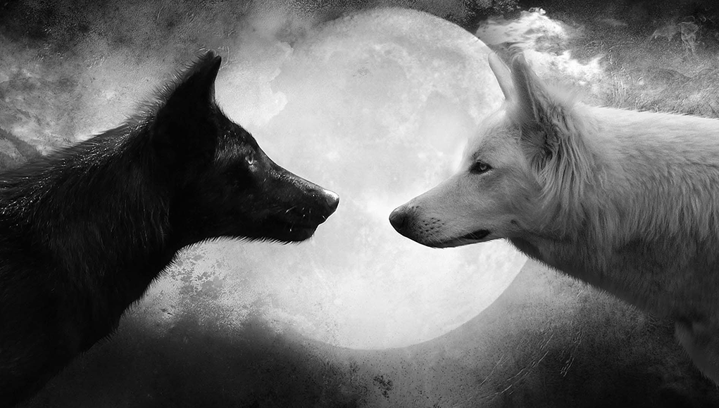 Der Weiße Wolf Gegen Den Schwarzen Wolf Positiv Negativ